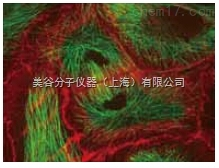 MetaMorph 活细胞成像分析系统